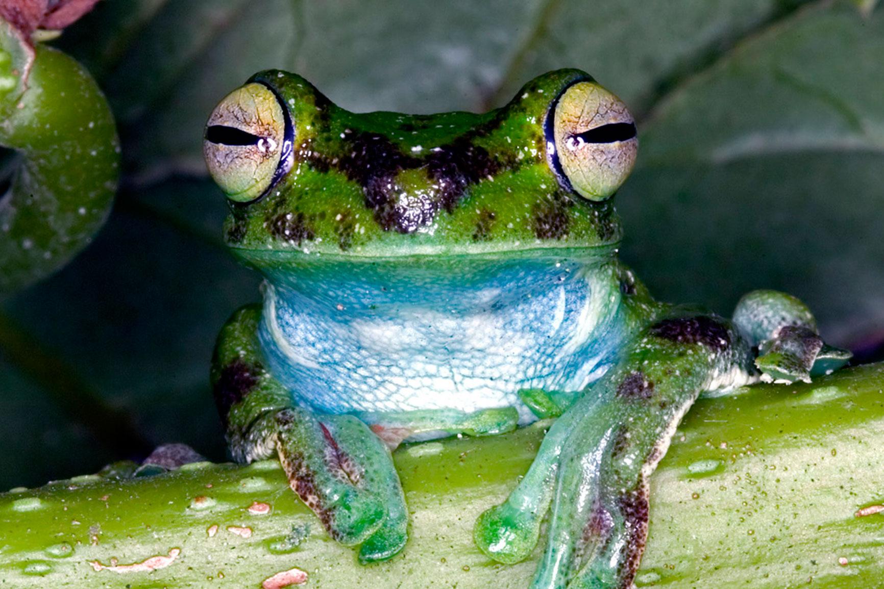 actividades-concierto-de-ranas-mindo-frogconcert-lugares-exoticos-en-ecuador