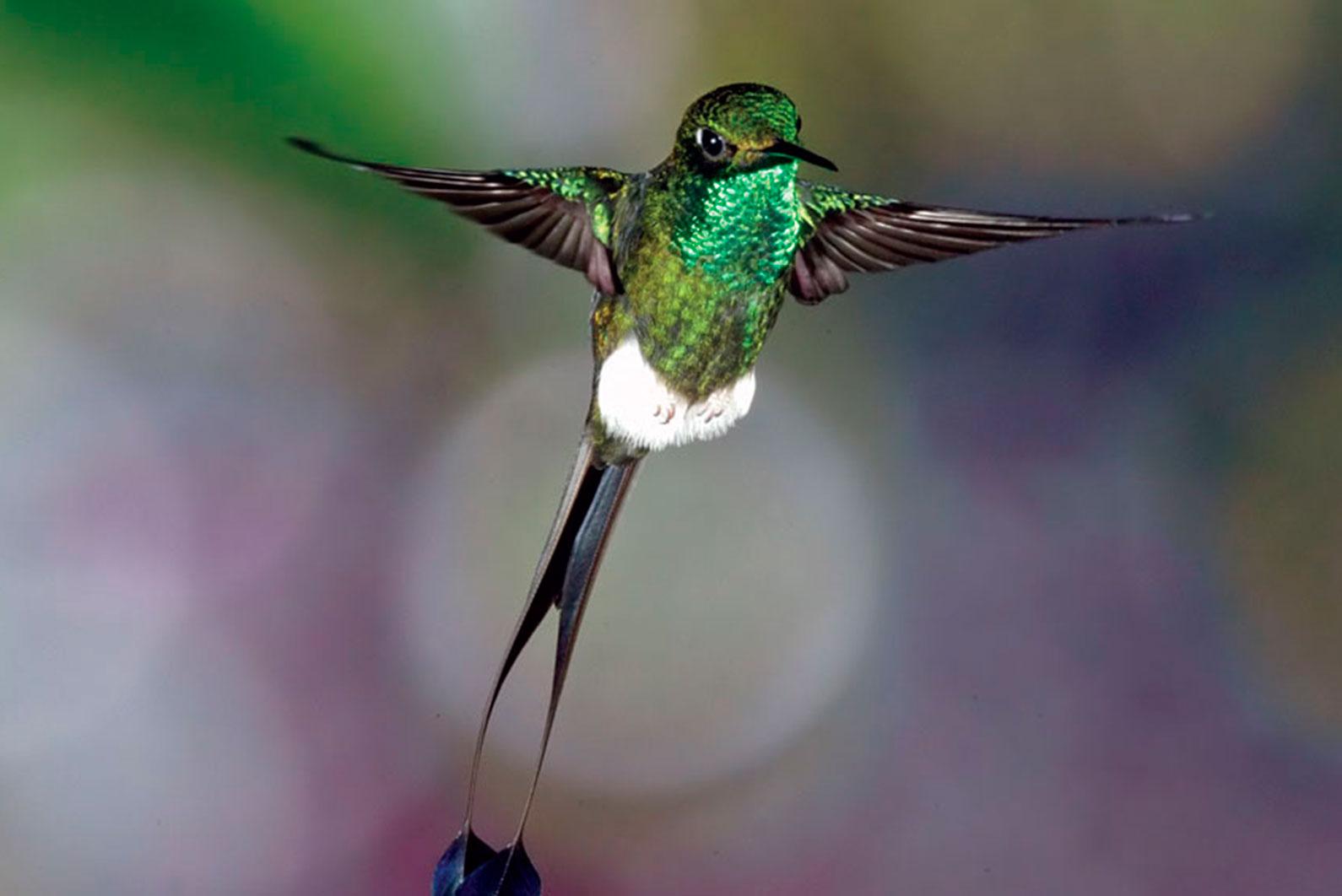 colibries-mindo-mariposario-mindo-precio